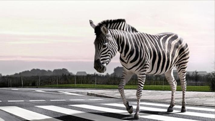Zebra Crossing A Road